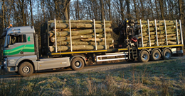 Brandhout op stam te koop